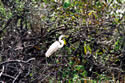 Birds in Everglades National Park